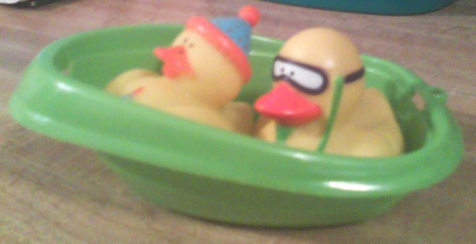 ducks in a boat